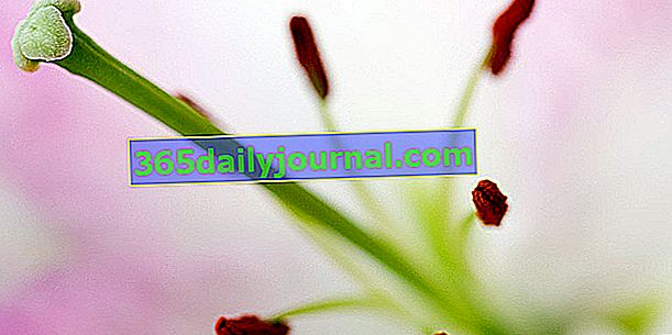 Comprender la reproducción de las plantas con flores.