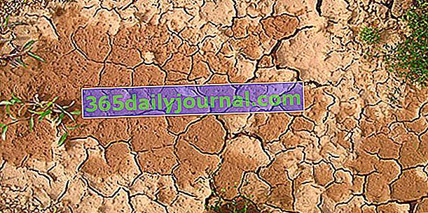 Różne rodzaje gleby w ogrodzie