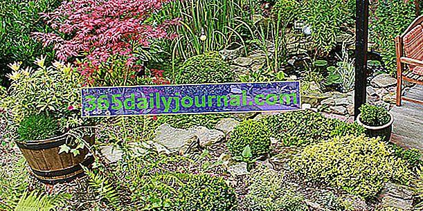 Eğimli bir setteki hangi bitkiler?