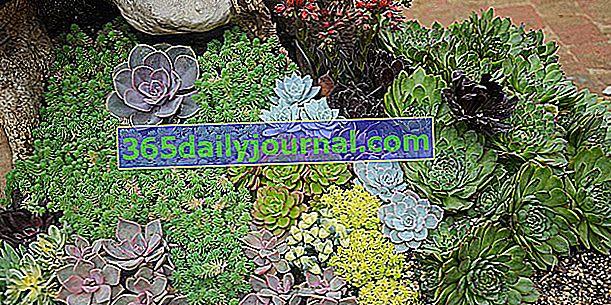 ¿Qué cactus y suculentas instalar en tu jardín?