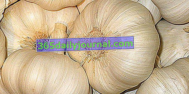 Отвара от чесън срещу мухъл, брашнеста мана и листни въшки