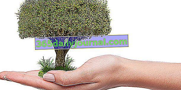 Reforestación, apadrinamiento y adopción de árboles: ¿qué pensar?