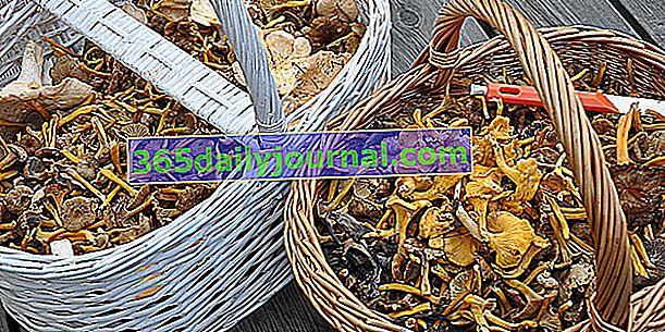 Gljive: glavna jestiva vrsta, kako ih prepoznati