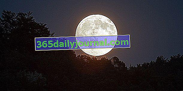Księżycowy kalendarz ogrodu - grudzień 2020 r