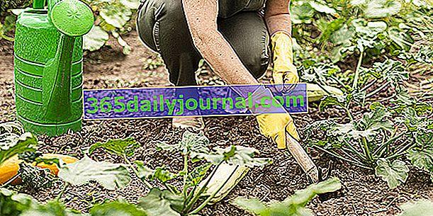 Поддръжка на зеленчуковата градина: плевене, окопаване, мулчиране ...