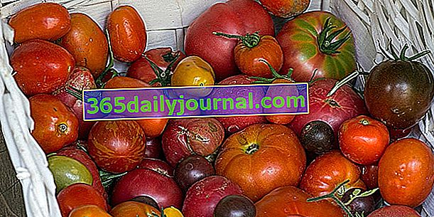 Los 10 tomates reliquia para plantar en el huerto