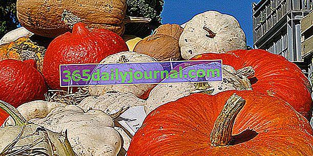 Dyniowate lub dynia: duża rodzina różnorodnych i kolorowych warzyw