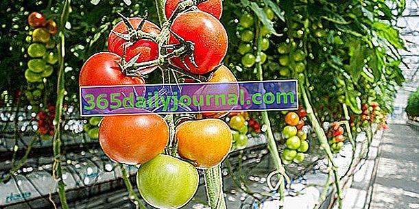 Аеропонова култура: изпаряване на синтетични хранителни разтвори