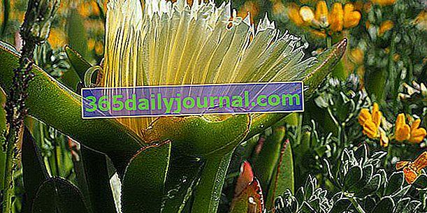 Vyhněte se invazivním nebo expanzivním rostlinám na zahradě