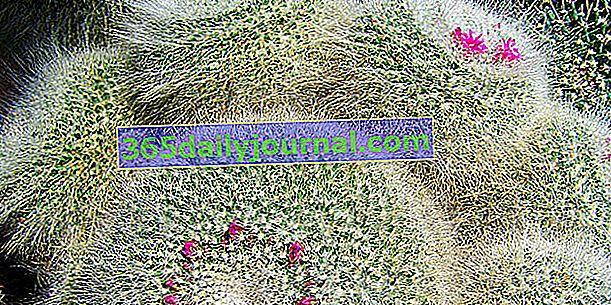 Rośliny tłuste, sukulenty i kaktusy: jak je odróżnić?