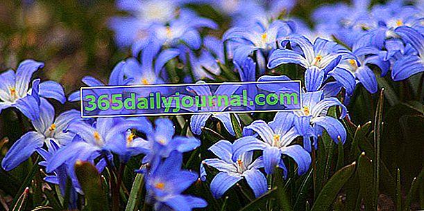 Strastveni vrtni sajam 2019. u Honfleuru (14)