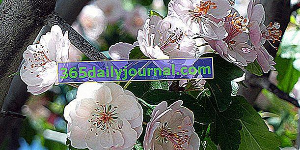 Sérignan-du-Comtat'ta nadir bitki günleri ve doğal bahçe 2019 (84)