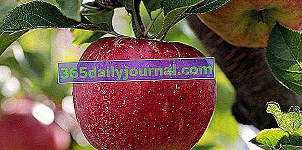 Sajam jabuka i tradicionalnog voća 2019. u Massiacu (15)