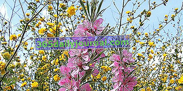 Kvitnúci živý plot: viac farieb!