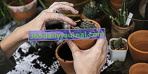 Yaşayan Dünya kursu: Harcamadan Bahçıvanlık - Erkek (38)