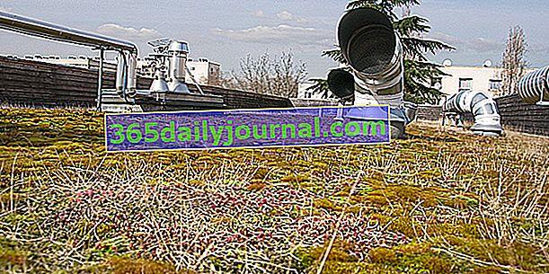 Zeleni krov ili zeleni krov: kratki pregled