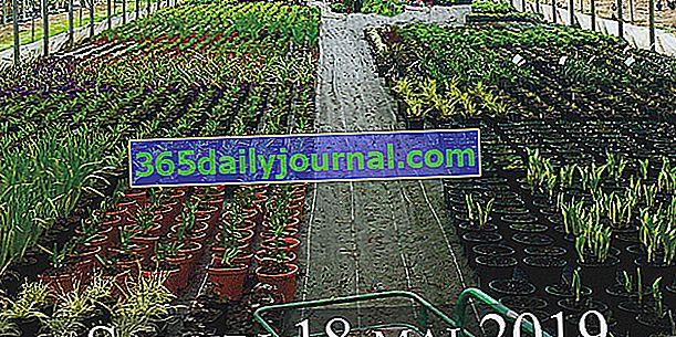 Посещение на оранжериите в Jardins des Martels - Giroussens (81)