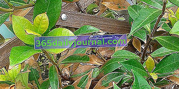 Plantas expuestas a productos tóxicos (limpieza de patios): ¿qué hacer?