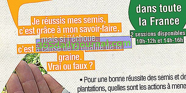 Bonne Graine, Bon Semis: El éxito de mis cultivos en Saint Ouen (93)