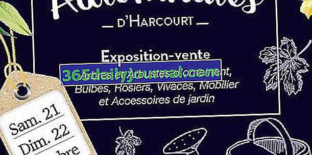 Harcourt jesen 2017. (27)