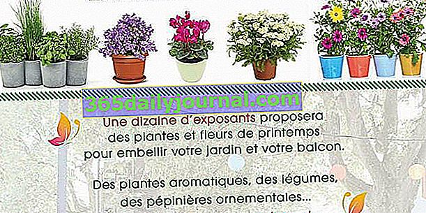 Пролетен пазар за растения и цветя 2018 във Вилербан (69)