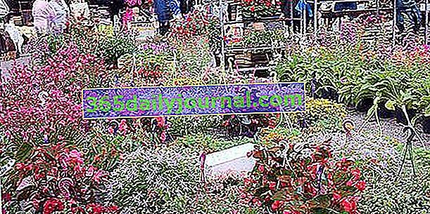Big Plant Market 2020 w Mirepoix (09)