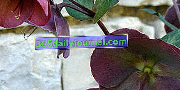 27o Día de la Planta en Bergères (Aube)