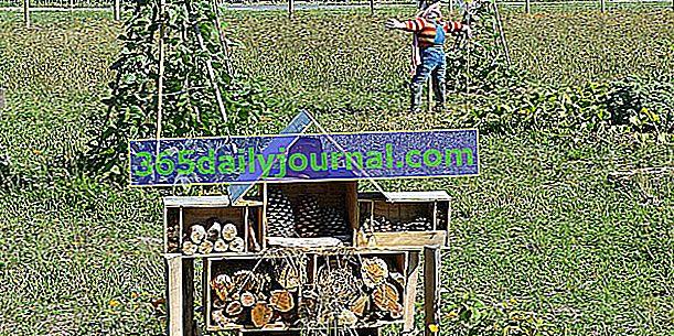 Stáž: Permakultura v zahradě - duben 2019 - Hénon (22)