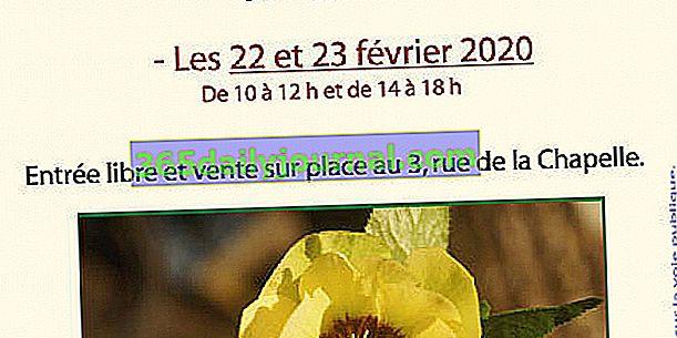 14. Hellébores Dani u Xirocourtu (54)