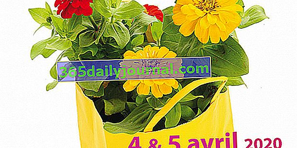 Floralys 2020 w Saint-Lys (31)