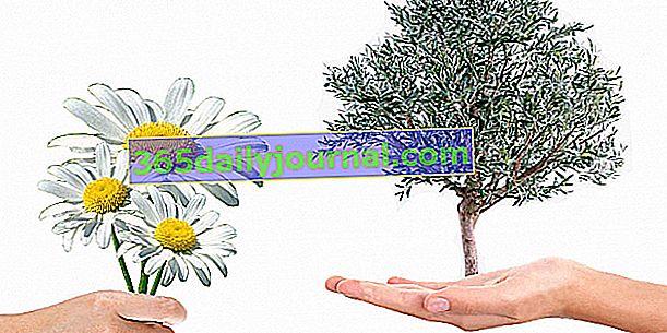 Barter za biljke Marguerittes za 2018. (30)