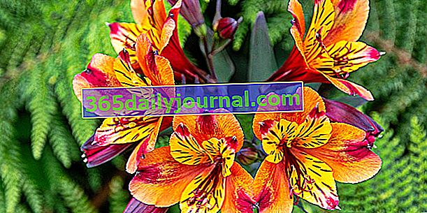 Четвърта изложба за продажба на растения в Ним (30)
