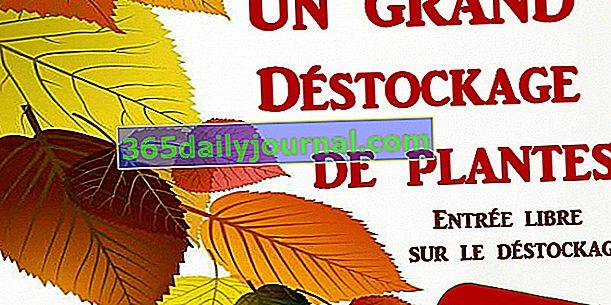 Duże usuwanie roślin z ogrodu egzotycznego i botanicznego Roscoff (29)