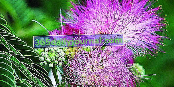 Florale 2020 Figanières (83)
