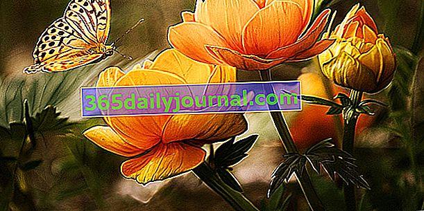 Zahrada ke snu 2019 v Saint Georges sur Baulche (89)