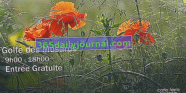 Festiwal Kwiatów 2020 - La Roche de Glun (26)
