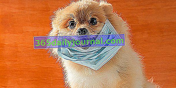 Môžu byť koronavírusom postihnuté psy a mačky?