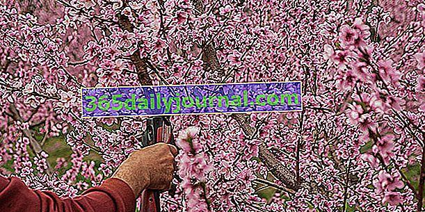 Prerezávanie ovocných stromov: kedy a ako?