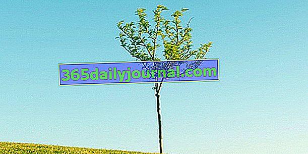 Plantar un árbol: ¿cuándo y cómo?