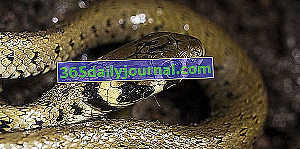 La culebra, aliada contra los roedores de jardín