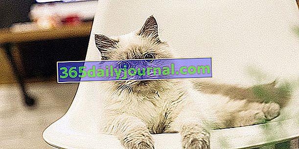 ¿Cómo eliminar el olor a orina de gato en casa?