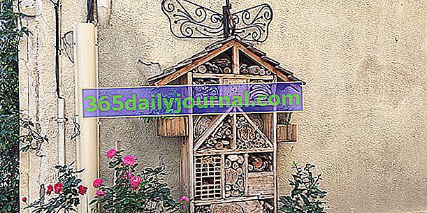 Jak zrobić hotel dla owadów w ogrodzie?
