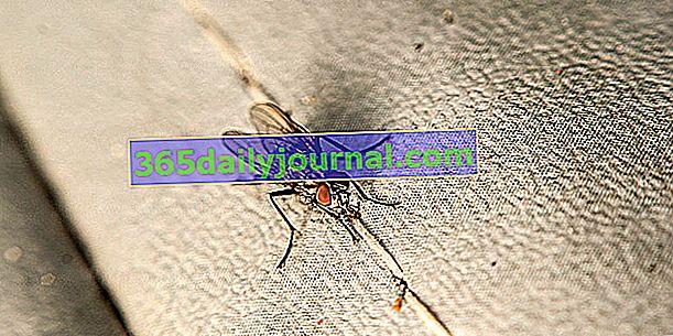 Jak pozbyć się much w domu?