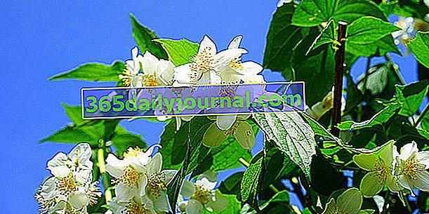 Arbustos en flor para todos los gustos y todos los jardines.