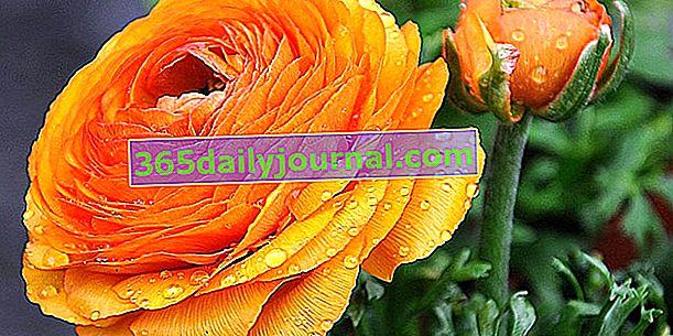 Bahçedeki en güzel 10 portakal çiçeği