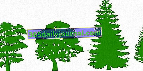 Różne sylwetki i porty drzew: wyjaśnienia