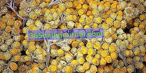 Helichrysum italiano: para absorber hematomas