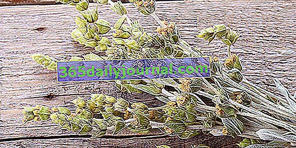 Grčki planinski čaj: bogat antioksidansima