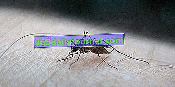 Растения против комари