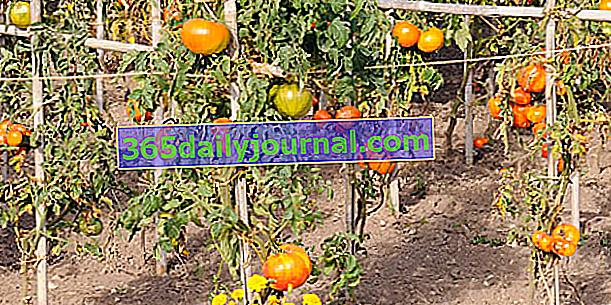 Консерватория за домати, Шато де ла Бурдасиер - Индре и Лоара (37)
